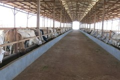 Bầu Đức tham vọng bán sữa khắp Đông Nam Á