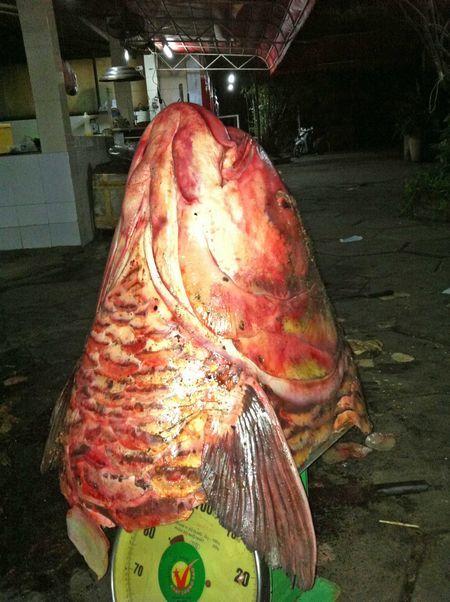 Xẻ thịt quái ngư 240kg ở miền Tây