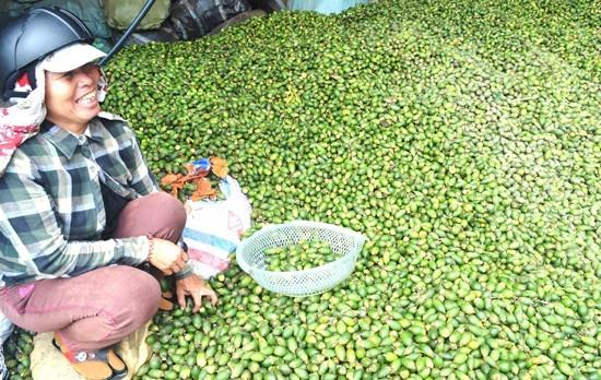 Ông Nguyễn Sự: Khuyến khích dân Hội An trồng cau