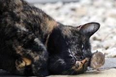 Ngược đời cảnh mèo kết bạn với chuột