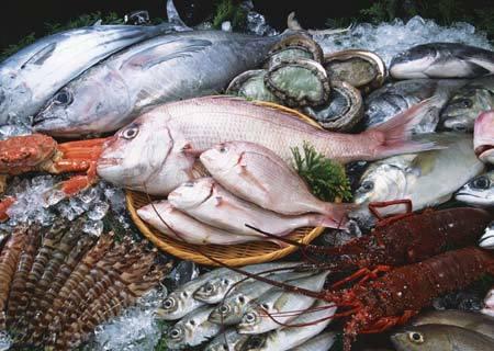 Ăn tim lợn mốc xanh, bồi bổ vi cá mập nhựa