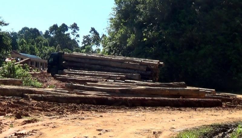 rừng, gỗ quý, Khu bảo tồn thiên nhiên Pù Hoạt, Nghệ An