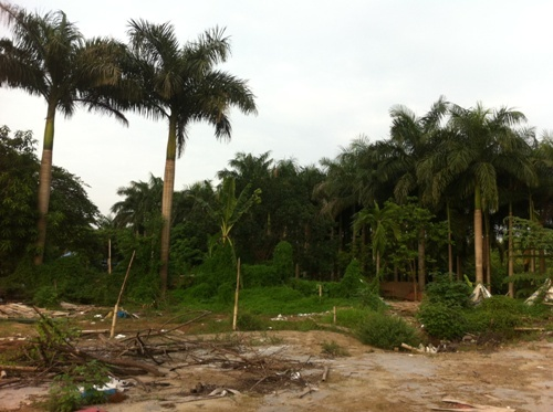 công viên hồ điều hòa Nhân Chính, Dự án công viên hồ điều hòa nghĩa trang Mai Dịch,  Vina Megasta, lấn chiếm công viên làm bãi đỗ xe