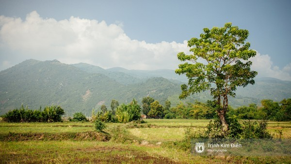 Phú Yên, hoa vàng, cỏ xanh, Gành Ông