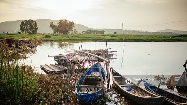 Ghé thăm Phú Yên để ngắm xứ sở 'hoa vàng trên cỏ xanh' đẹp hơn cả phim!