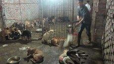 Thời tàn của làng đồ tể mổ chó lớn nhất Hà Nội