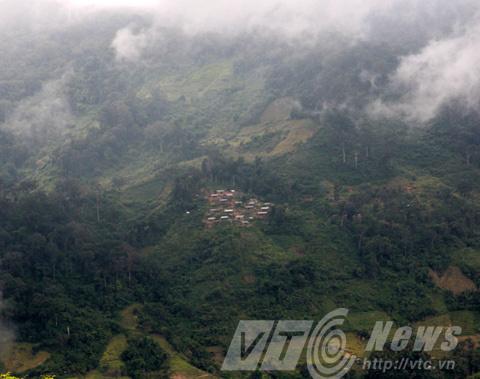 6,5 tấn sâm Ngọc Linh của già làng Xê Đăng Tây Nguyên