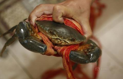 Độc chiêu: Quấn 31 mét dây để tăng cân cua biển
