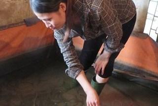 Thực hư chuyện 'vỗ béo lươn bằng thuốc tránh thai' tại xứ Nghệ