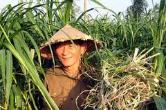 Hồ Giáo - Người từ chối làm quan để được chăn bò