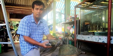Kỳ lạ chuyện rùa 'dị dạng' giúp chủ cải hoán vận mệnh