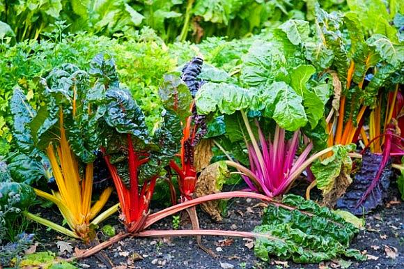 Tẩm bổ yến sào 500 triệu, ăn rau dại đi chuyên cơ