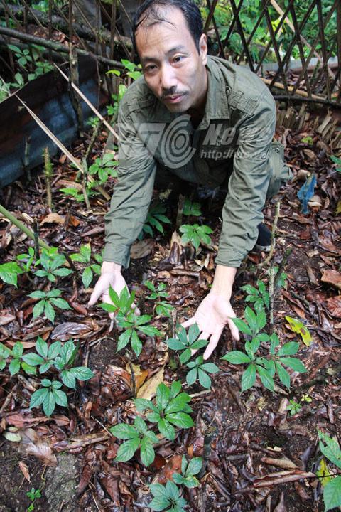 Loài chuột bé xíu xơi tái cả trăm tỷ trên núi Ngọc Linh