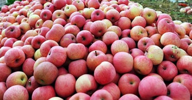 táo đỏ, Nhật Bản, nhập khẩu, hải quan, Quảng Ninh, hóa chất, táo-đỏ, Nhật-Bản, nhập-khẩu, hải-quan, Quảng-Ninh, hóa-chất,