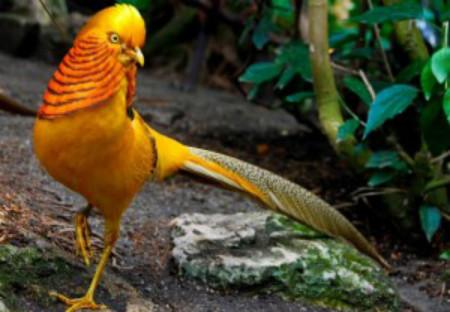 'Tỷ phú' chơi chim vùng chiêm trũng