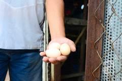 'Trang trại' trồng rau, nuôi gà giữa lưng trời ở Hà Nội