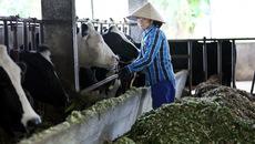 5 cử nhân treo bằng chung nhau chăn một trại bò