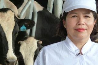 Bán con bò sữa tỷ đô: Nhà nghèo 'đếm cua trong lỗ'