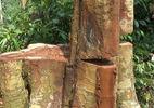 Kiểm tra việc xẻ rừng biên giới tận thu gỗ quý
