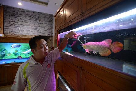 200 triệu chơi cá kim long 9999