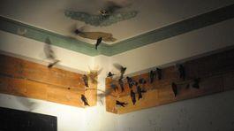 Khách sạn Nha Trang: Người ở cùng chim yến