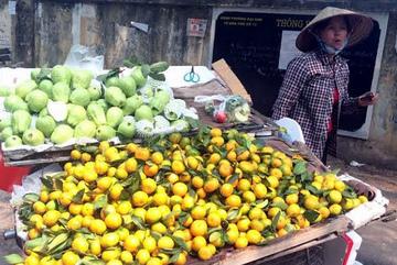 Thực đơn dân Hà thành: Lợn chất cấm, rau ngộ độc, quýt ngọt Tàu