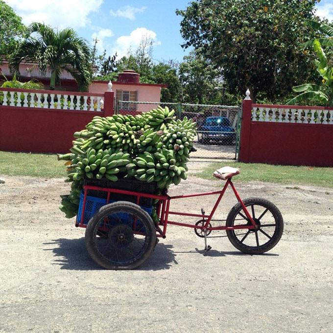 nuôi con, Cuba, cha mẹ, phụ huynh