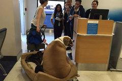 Mua ghế hạng sang cho chó đi máy bay