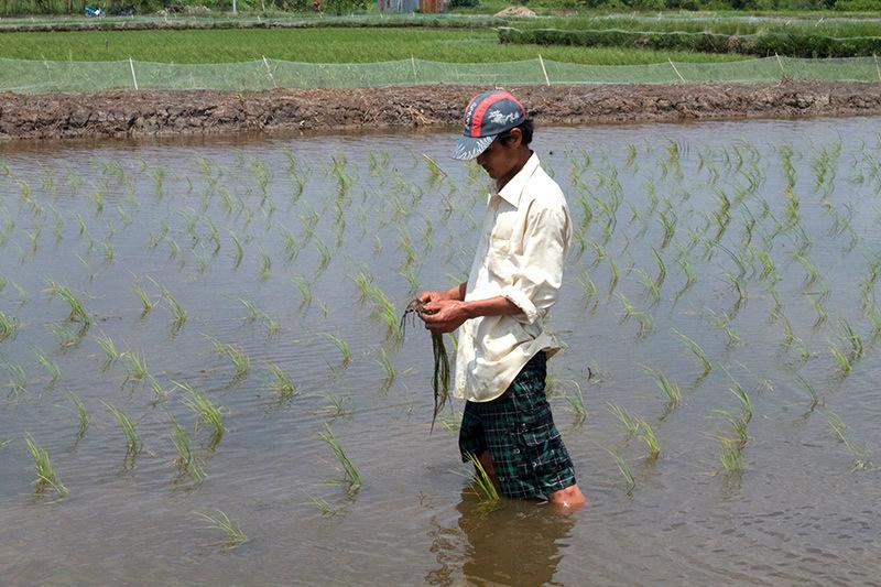 ĐBSCL, ngập nước, Cà Mau, biến đổi khí hậu, nước biển dâng, đồng bằng sông Cửu Long