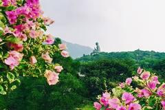 Kinh nghiệm du lịch Hồng Kông 6 ngày 5 đêm chỉ với 15 triệu đồng