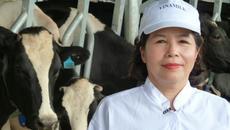 Bán con bò sữa tỷ đô: 'Béo đẹp' phải kén chọn cẩn trọng