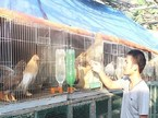 8X bỏ ghế trưởng phòng, từ chối đi Úc để về nhà nuôi gà