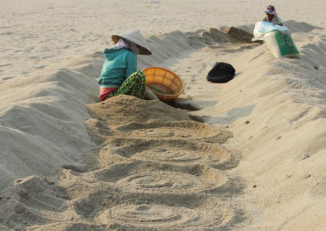 Độc nhất Việt Nam: Cánh đồng ủ giá bên bờ sông