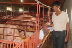 Ông 'lợn Tây' 2 triệu USD ở Nam Định