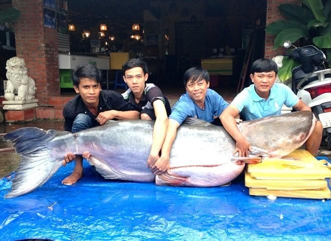 Thủy quái 200kg vào nồi lẩu dân nhậu Sài Gòn