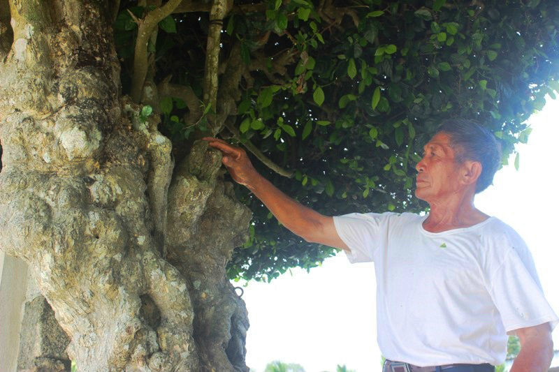 Hà Tĩnh, hàng rào, trăm tuổi, tạo dáng
