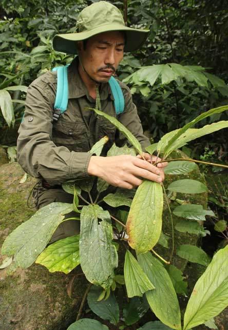 Kỳ nhân 20 năm trồng sâm trên đỉnh Hoàng Liên Sơn
