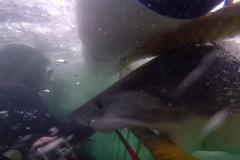 Trải nghiệm kinh hoàng về cú đớp của cá mập khủng