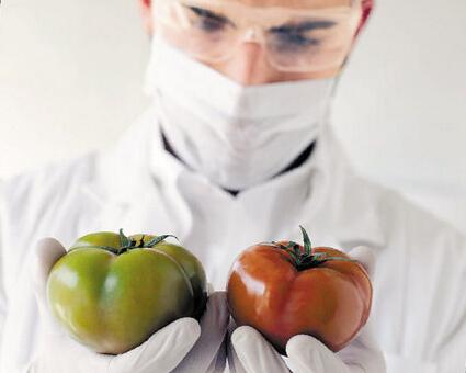 Rụng rời quả cà chua Trung Quốc 80 ngày không hỏng