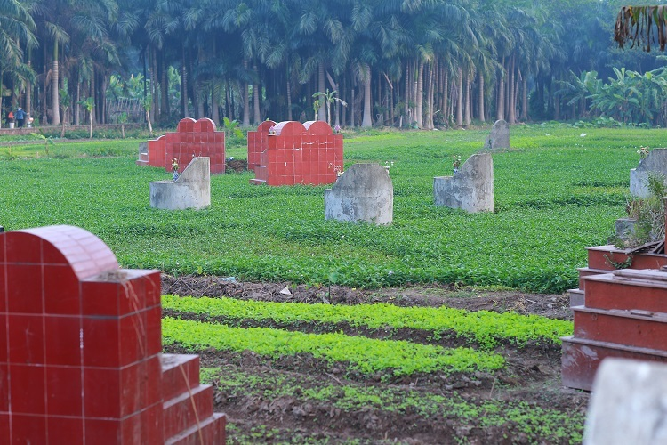 Rau muống nghĩa địa, đặc sản riêng có Thủ đô