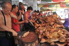 Việt Nam có thể bị khách Anh tẩy chay vì ăn thịt chó