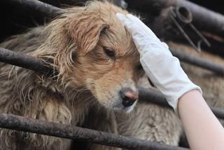 Hạ viện Anh tranh luận về yếu tố văn hóa trong ăn thịt chó