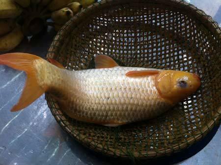 chăn nuôi, tiết kiệm, nuôi cá, trồng rau, ban công, ao cá, rau sạch, chăn-nuôi, tiết-kiệm, nuôi-cá, trồng-rau, ban-công, ao-cá, rau-sạch,