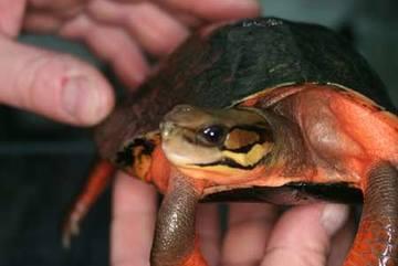 Lên núi săn rùa thần 300 triệu đổi đời