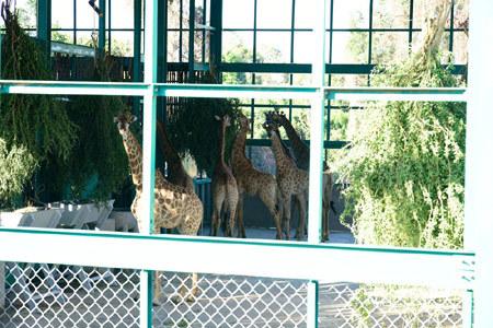 200 động vật quý hiếm cập bến Vinpearl Safari Phú Quốc