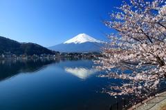 Tình yêu nước Nhật trong tôi