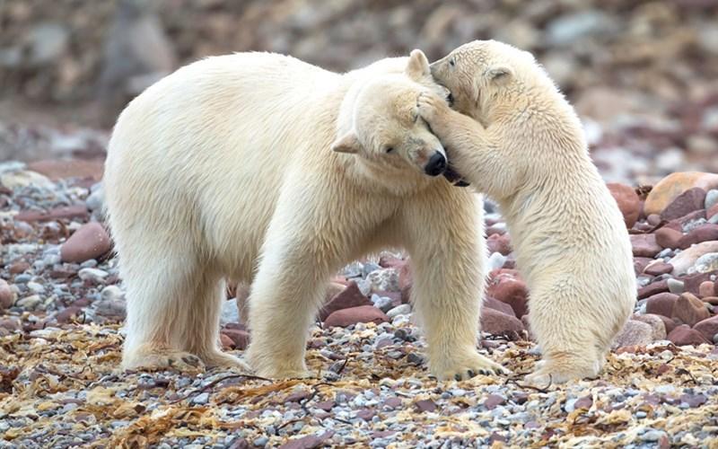 Những khoảnh khắc giống con người đến kinh ngạc của các loài động vật
