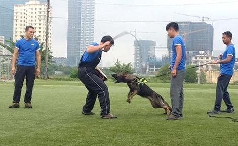 Chú chó Becgie đắt nhất Việt Nam: Gần 500 triệu