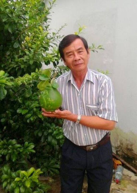 1,3 triệu đồng/trái bưởi bản đồ Việt Nam trưng Tết