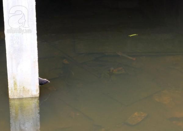 Hà Nội chơi sang: Thả cá, nuôi vịt trong tầng hầm biệt thự triệu đô